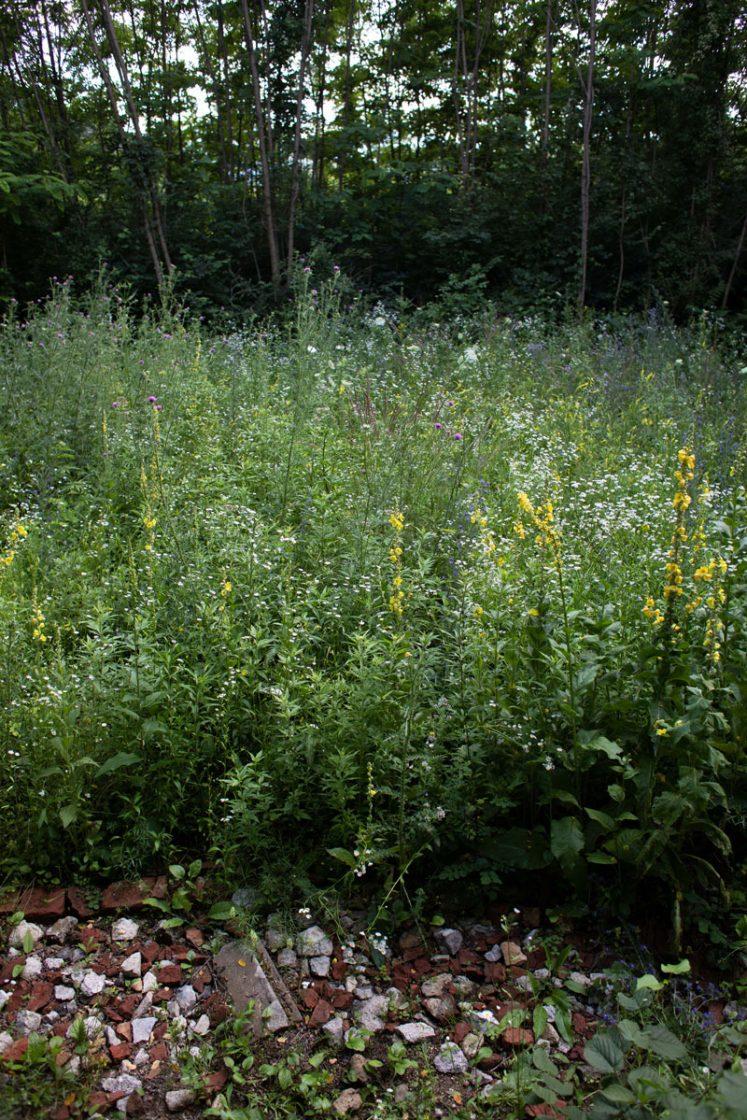 Garten Am Brand - (c) Katja Hasenoehrl 3